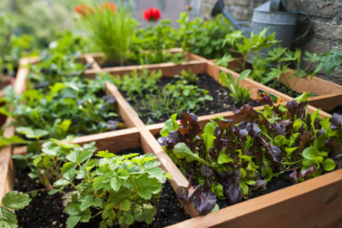 Top 8 Easiest Vegetables To Grow Every Beginner Must Know